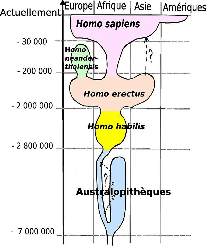 Evolution des humains
