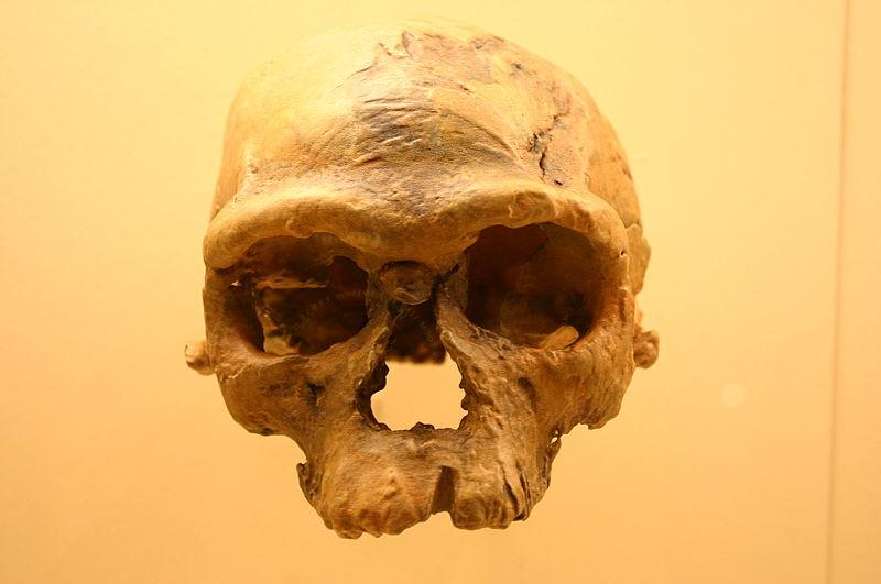 Jebel irhoud 1 homo sapiens